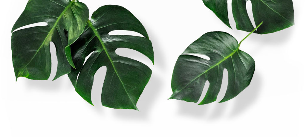 Tropical Plants for sale online