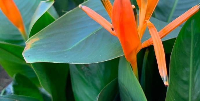 rare tropical plants for sale