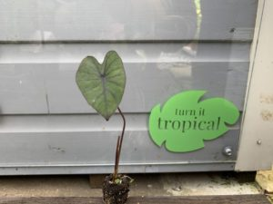 Turn it Tropical Product Image
